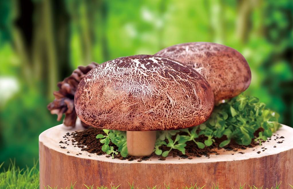 烧肉蘑菇包